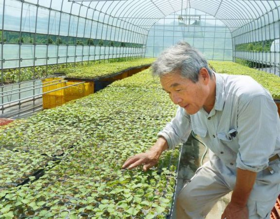 Japans-agriculture