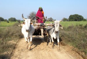 620_main_woman-farmer-kalli-in-banda-copy