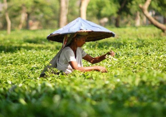 agriculture-of-meghalaya3