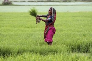 india_agriculture_27288271