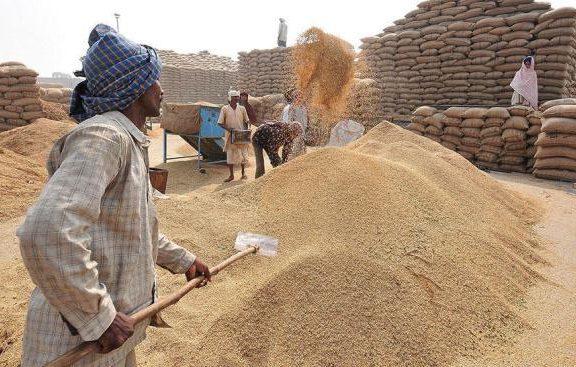 wheat-in-mandi