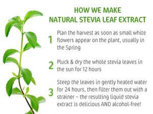 stevia-banner