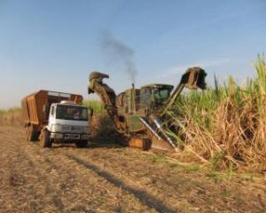 sugarcane mechnical harvesting