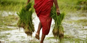 India  to celebrate 15th October every year as a Women Farmers Day